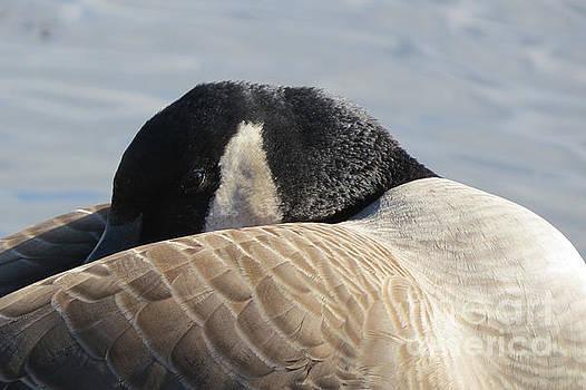 canada goose sale winnipeg