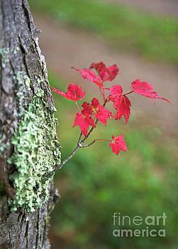 Canadian Fall... by Nina Stavlund