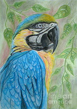 Blue and Yellow Macaw by Cybele Chaves