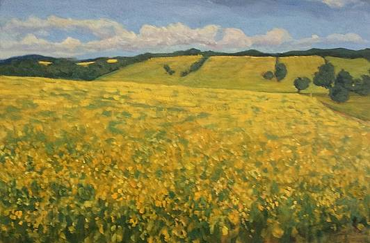 Canola fields by Liliane Fournier