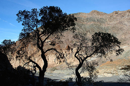Canyon Trees by Kathy Stanczak