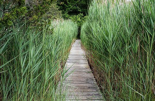 Cape Cod Marsh Walk by Lee Fortier