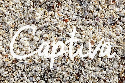 Edward Fielding - Captiva Island Seashell