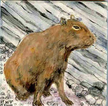 Capybara by Dy Witt
