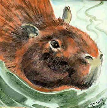Capybara Swimming by Dy Witt