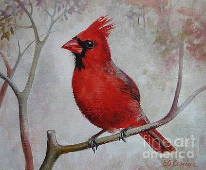 Cardinal by Elena Oleniuc