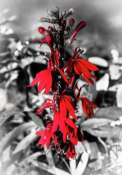 Cardinal Flower 2 by Debra Forand