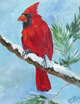 Cardinal  by Gloria Turner