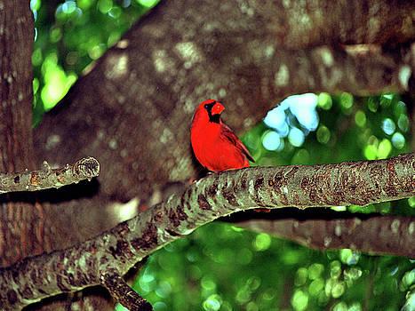 Cardinal Visit by Adele Moscaritolo