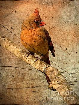 Cardinal with Age by Debbie Green