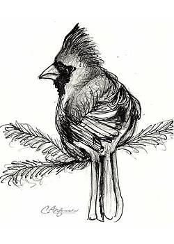 Cardinals Rule by Carol Allen Anfinsen