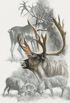 Caribou by Barbara Keith