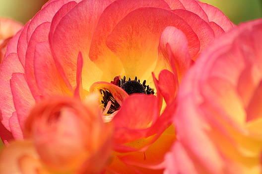Carlsbad In Bloom by Martha Layton Smith