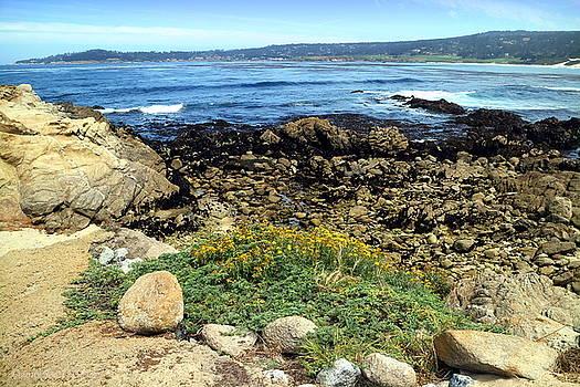 Carmel Beach At Low Tide by Joyce Dickens