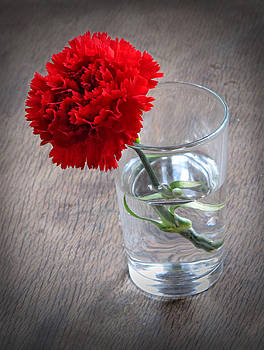 Carnation in a Glass by Dave Mills