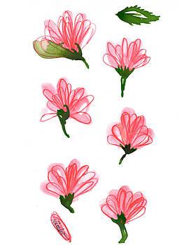 Carnation by Kimbo Jackson