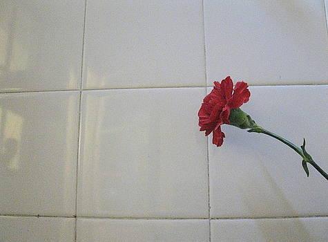 Carnation by Maria Jose Llanos