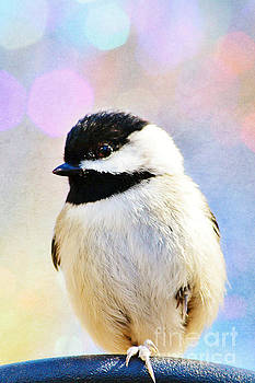 Carolina Chickadee by Kelly Nowak
