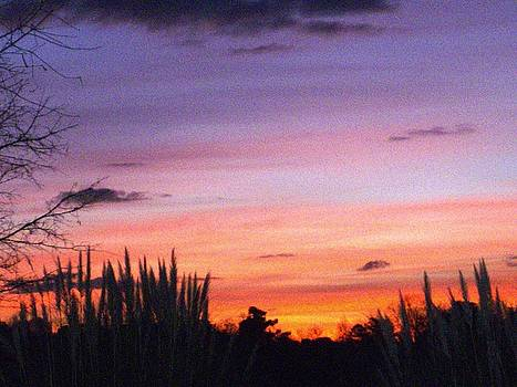 Carolina Sunrise by Linda Bennett