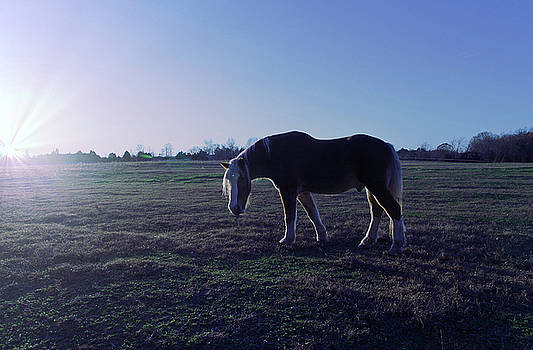 Carriage Horse by Jay D Anderson