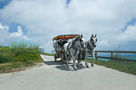 Carriage Ride by Lori Goodwin
