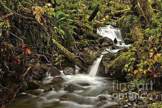 Cascades In Quinault by Adam Jewell