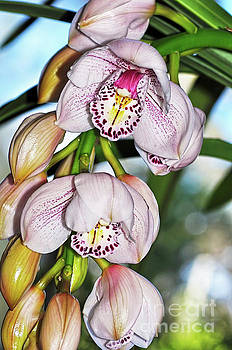 Cascading White Orchids by Kaye Menner by Kaye Menner