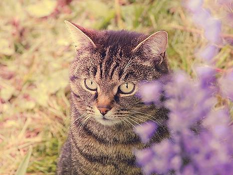 Cat Among The Bluebells by Anne Macdonald