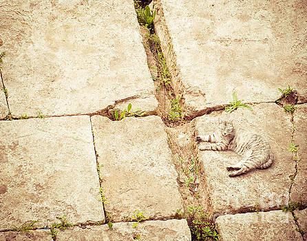 Sonja Quintero - Cat Among The Ruins