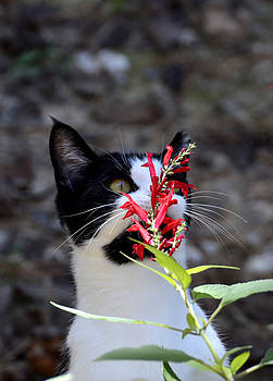 Cat  And The Flower by Charles Bacon Jr