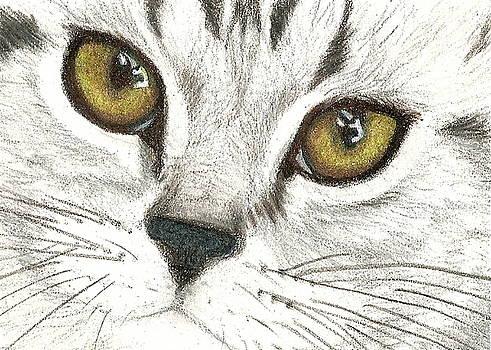 Cat by Christine  Bennett