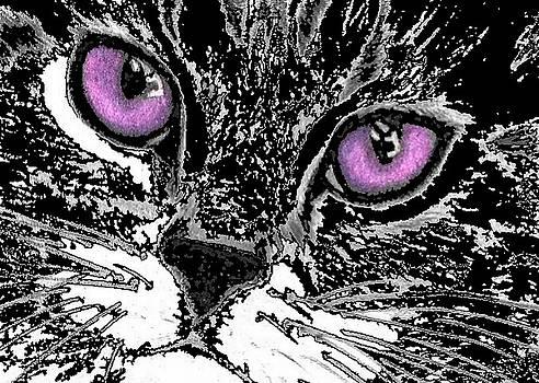 Cat eyes by Christine  Bennett