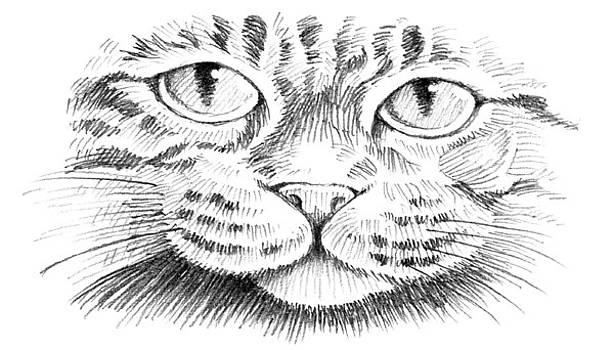 Cat Face by William Krupinski