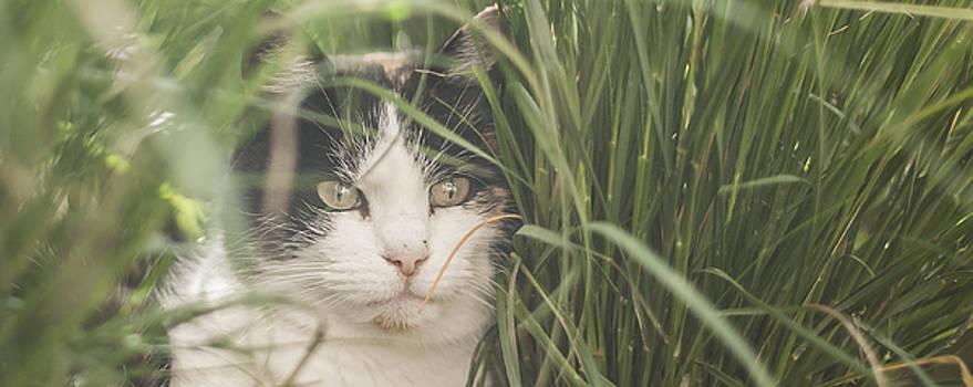 Cat in grass by Danny Motshagen