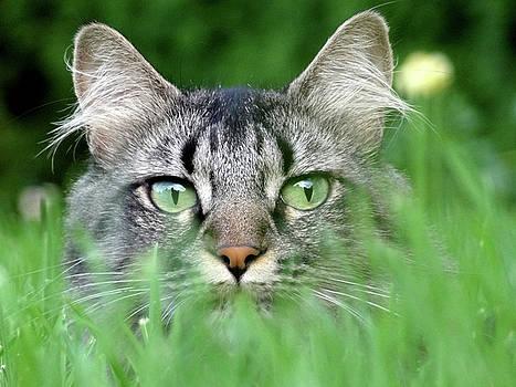 Cat in the Grass by Anne Mott
