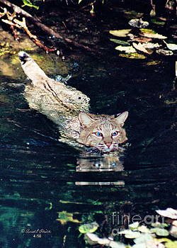 Cat in the Water by Ansel Price
