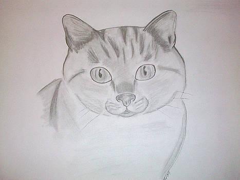 Cat by Kristen Hurley