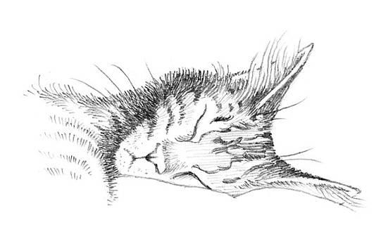 Cat Nap by William Krupinski