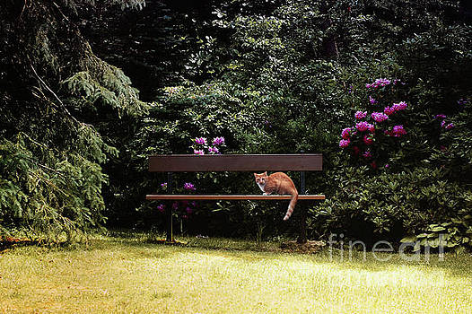 Cat on a Bench by Elaine Manley