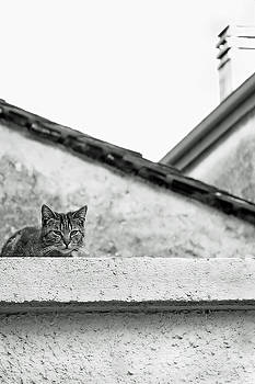 Cat on a Roof, Varenna by Brooke T Ryan