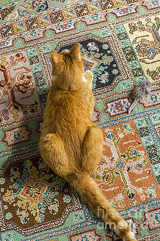Patricia Hofmeester - Cat on carpet with toy mouse