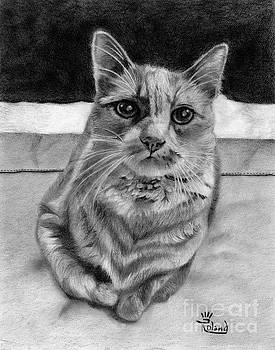 Cat on the Bed by Tracy Roland