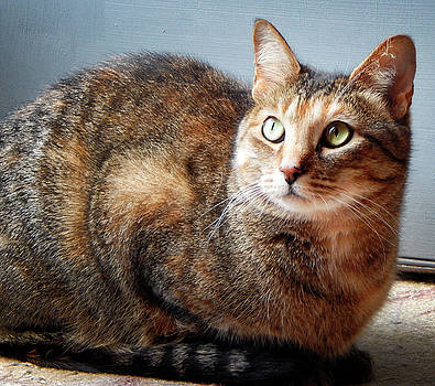 Cat Pose by Sarah Barber