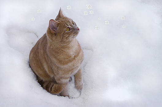 Cat with Snowflakes by Jacqi Elmslie