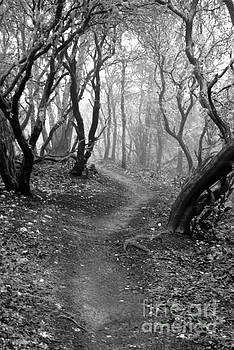 Cathedral Hills Serenity in Black and White by Marie Neder