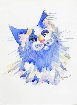 Cats Aren't Blue by Marsha Elliott