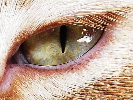 'Cats Eye' by Paula  Heffel