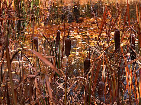 Cattails - Autumn pond by Stuart Turnbull