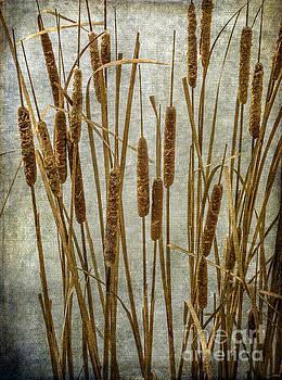 Cattails by Tamara Becker