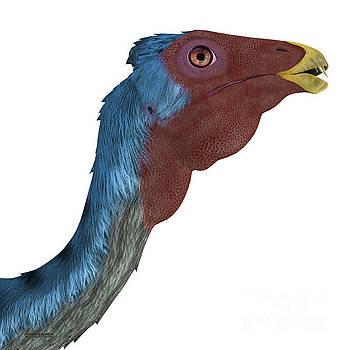 Corey Ford - Caudipteryx Dinosaur Head